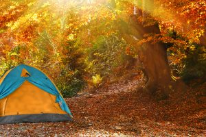 Camping tent in autumn forest on sunny day