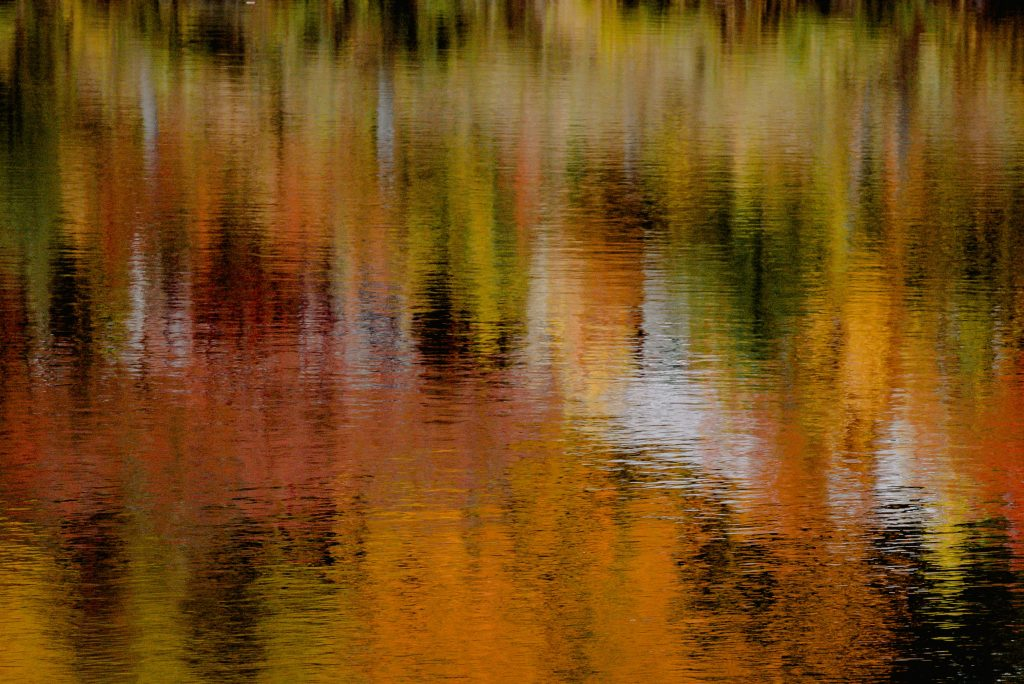 fall leaves reflected in lake water