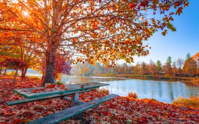 A 2020 Autumn on Lake Lanier